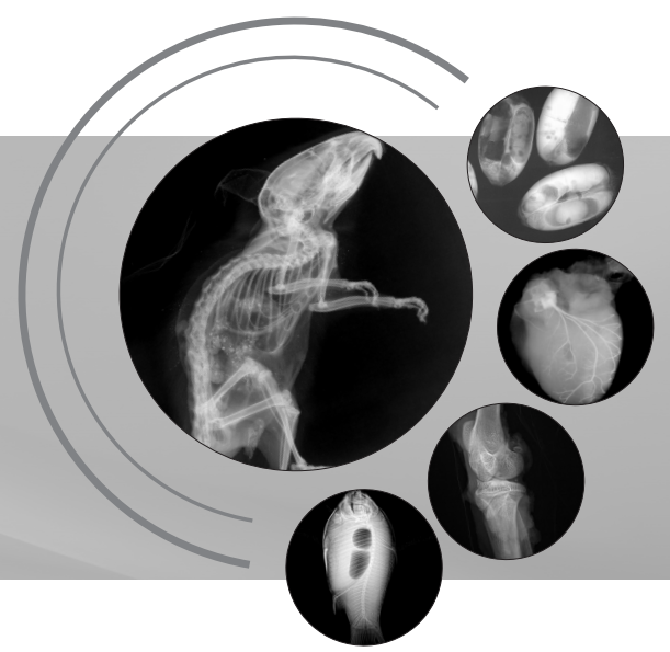 生命科学研究、小动物、种子雷竞技官网